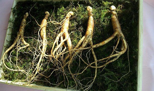 Pflanze des langen Lebens
