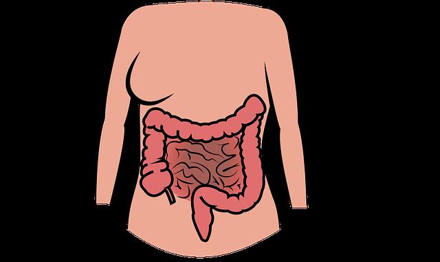 """Probiotika, die """"guten"""" Darmbakterien"""