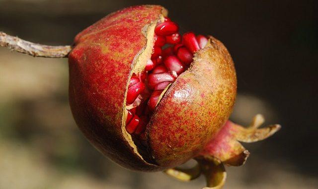 Granatapfel Paradiesapfel